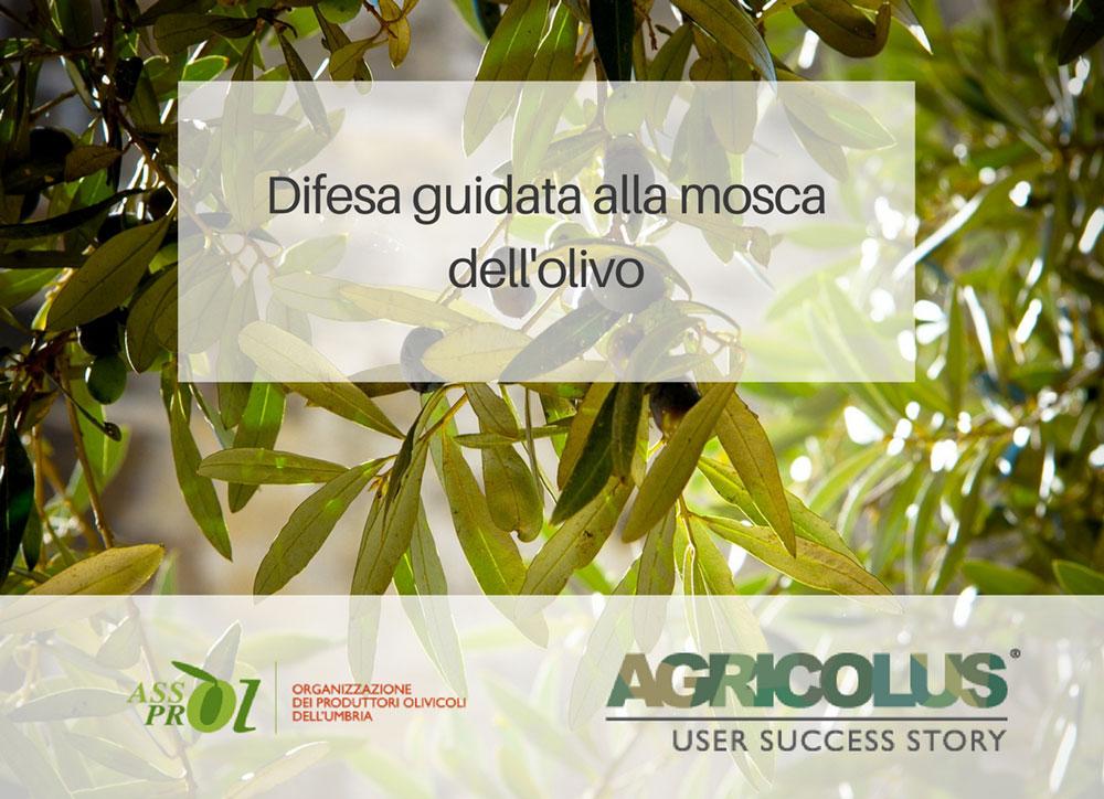 Difesa guidata alla mosca dell'olivo :: Assoprol