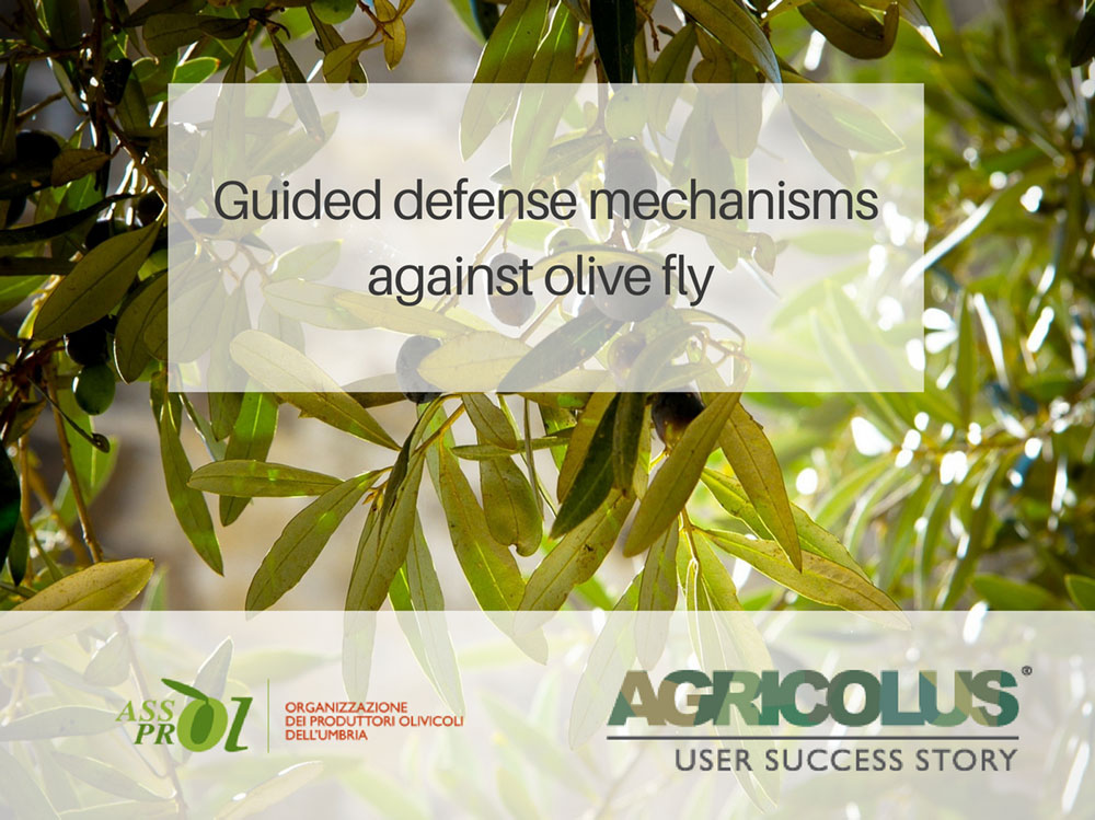 Guided defense mechanisms against olive fly :: Assoprol