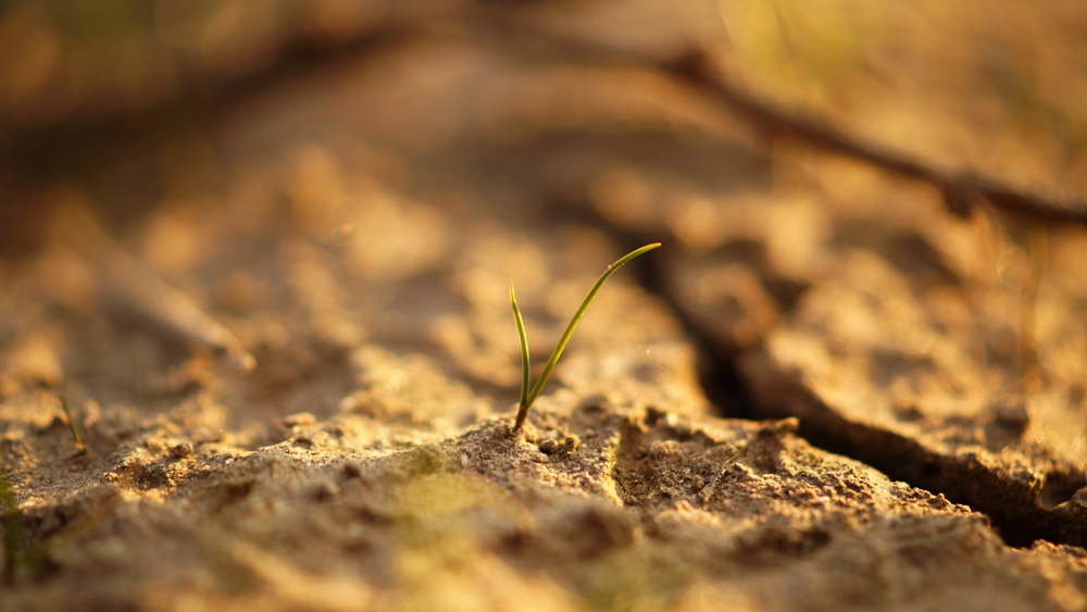 Sistemi di Supporto alle Decisioni (DSS) per l'irrigazione