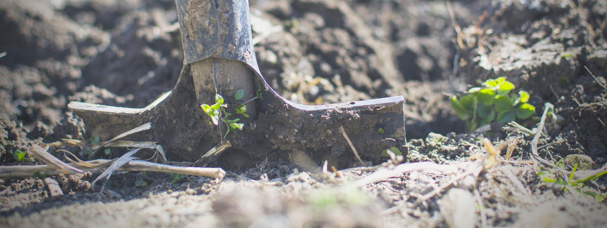 Agricolus – The platform for precision farming