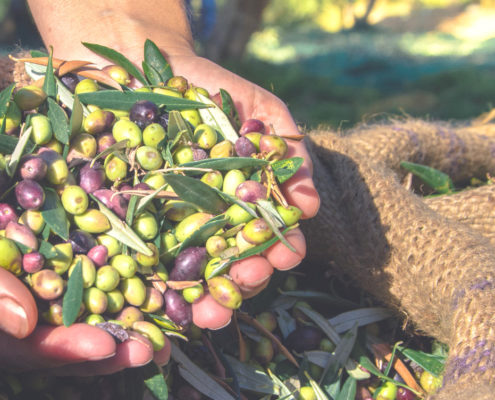 OLIWES for olive grove management