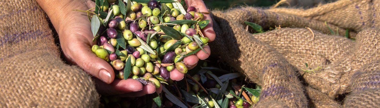 OLIWES Olive Warning Enterprise Suite | Agricolus