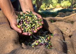 OLIWES Olive Warning Enterprise Suite | Agricolus