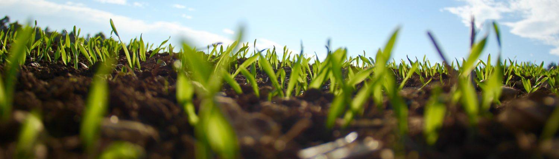 Piante che crescono è la missio di Agricolus