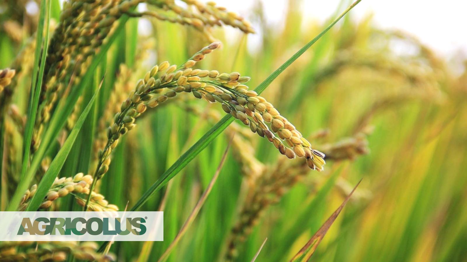 Assistenza tecnica agronomica in campo: costo o opportunità?