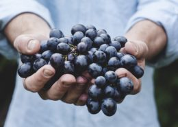 harvest for grape ripening