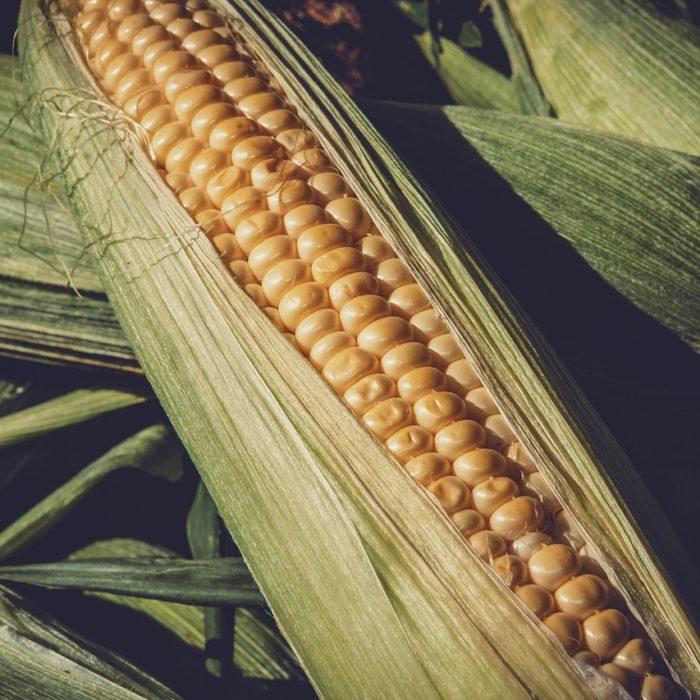 Agricolus per il mais: una nuova soluzione