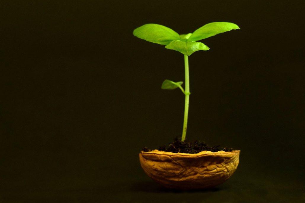 sviluppo pianta