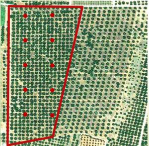 crop scounting - campionamento sistematico