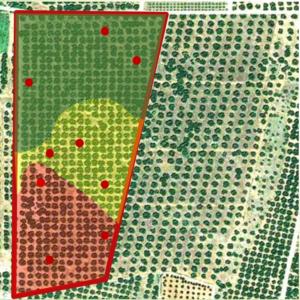 crop scouting - campionamento stratificato