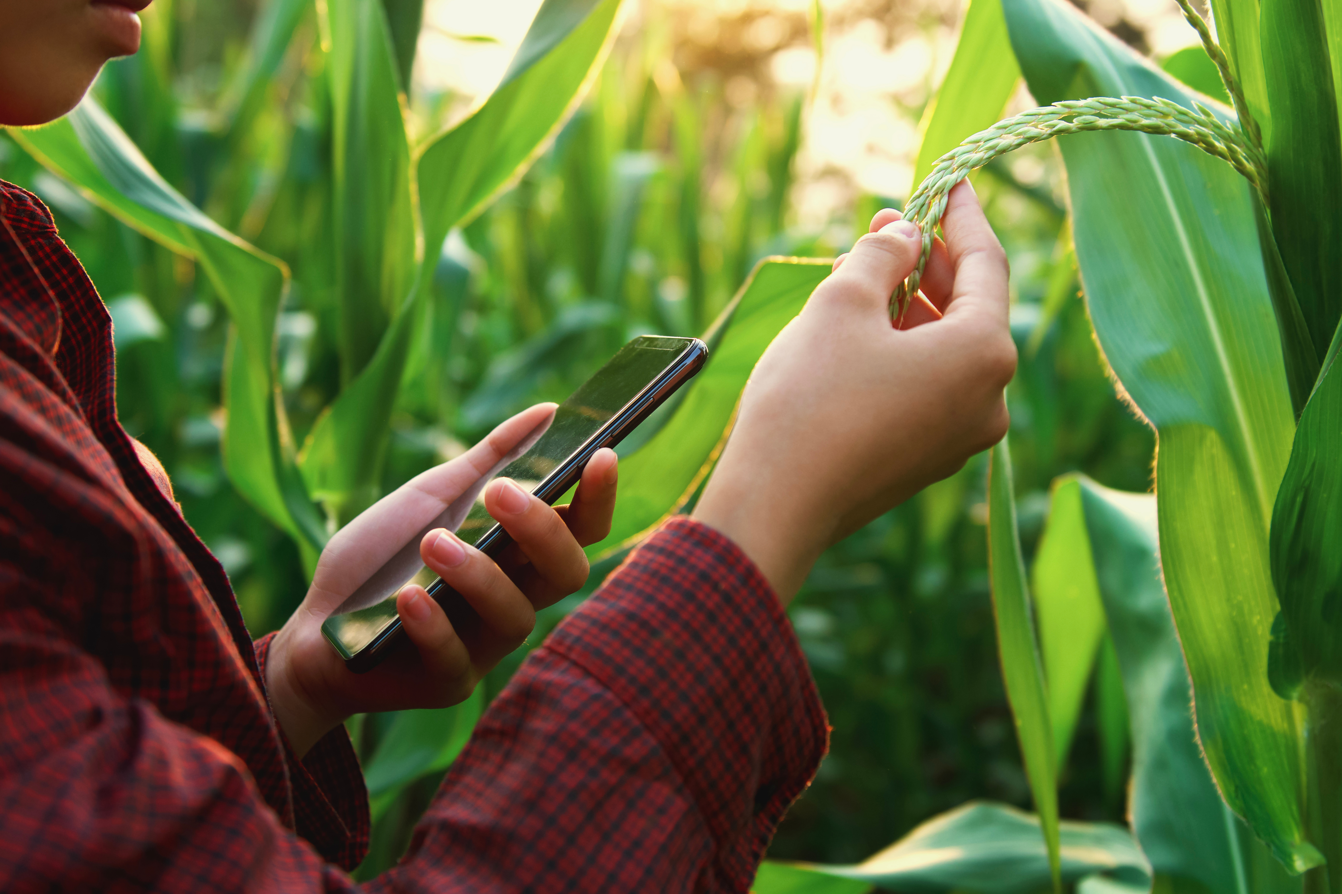 Some suggestions to increase the effectiveness of crop scouting