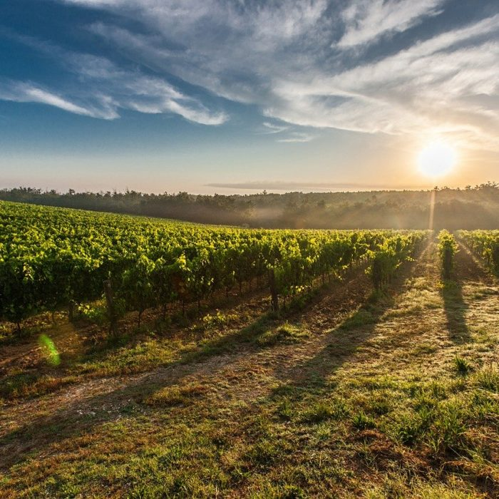 Technological innovation in viticulture with GrapeDSS