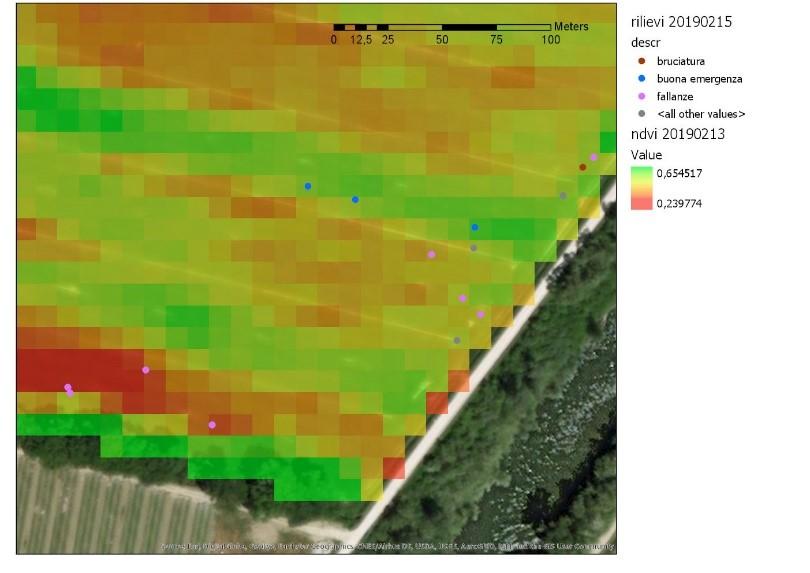 immagine satellitare con indice NDVI