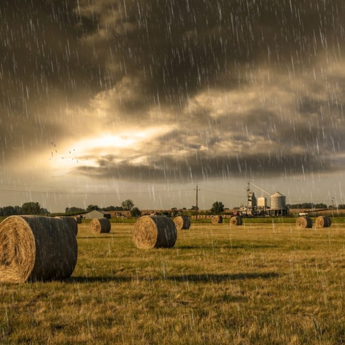 Virtual weather stations: the new service of Agricolus platform