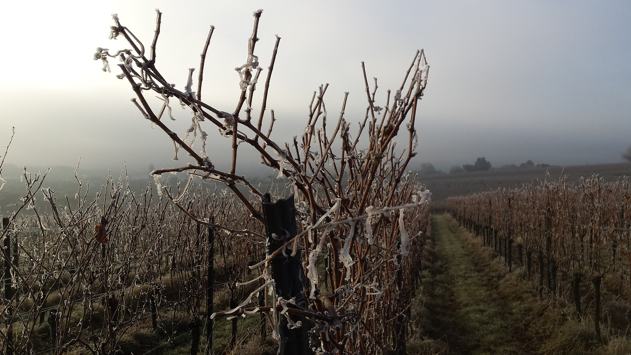 Spatial analysis of vineyard frost risk