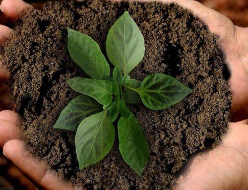 La sostenibilità attraverso l'agricoltura di precisione